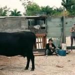 ¿Vacas en nuestra vida?